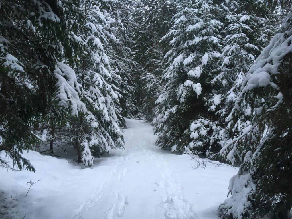 Snöig morgon