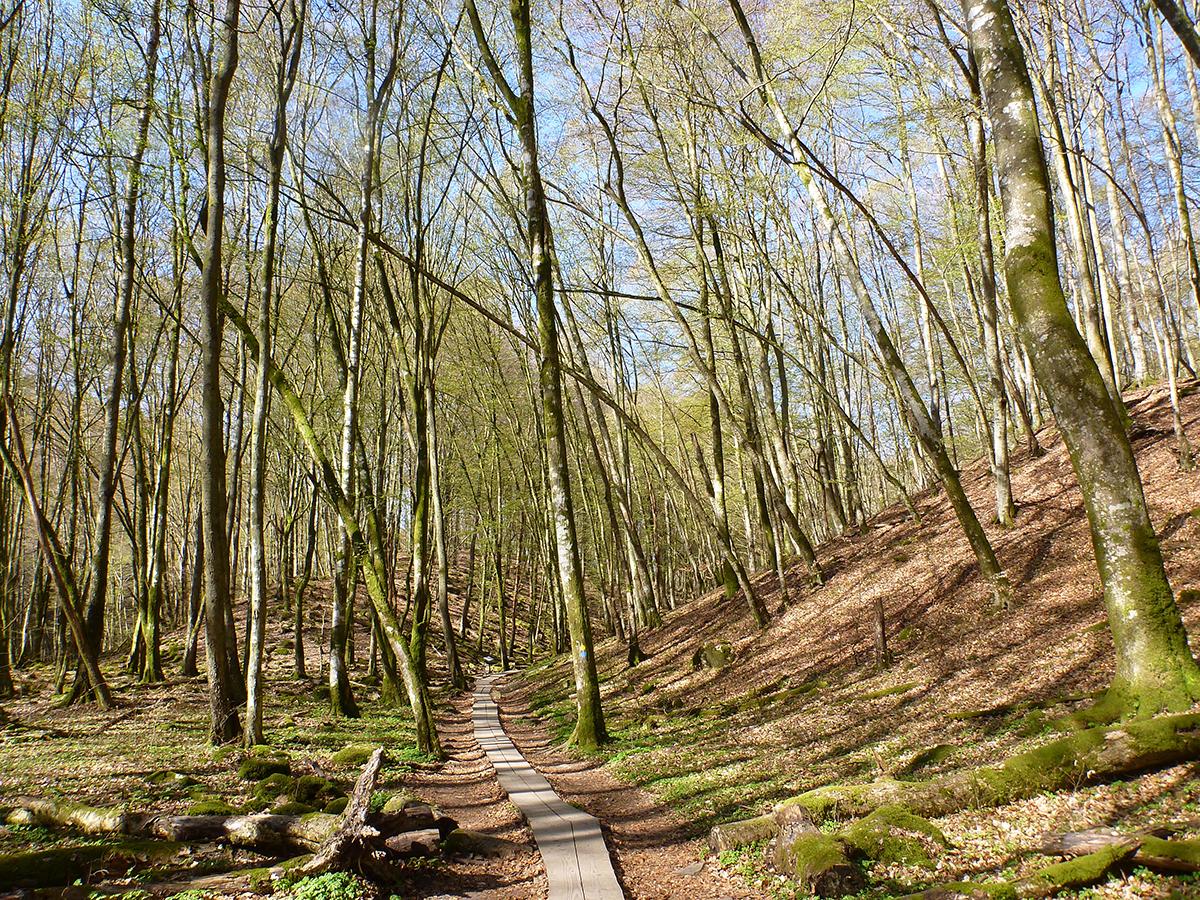 Lätt och mysigt att gå i ravinen i Söderåsens nationalpark