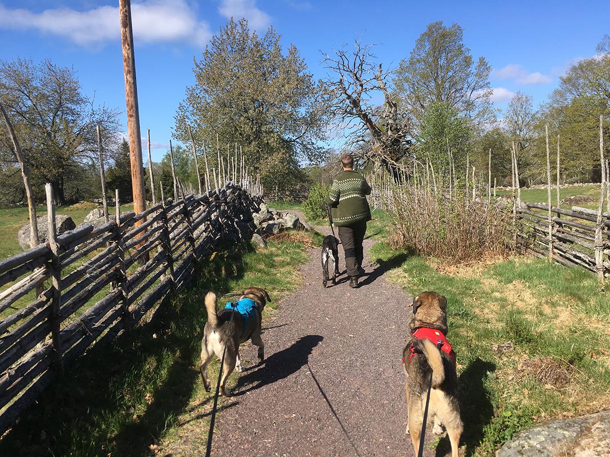 Här är vi på väg fram mot Kvilleken i det idylliska naturreservatet Kvill