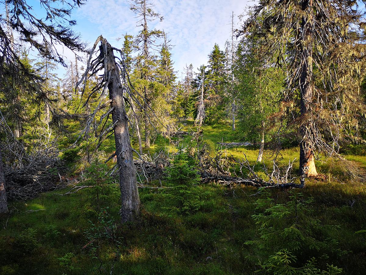 Känslan av vildmark och orördhet är total