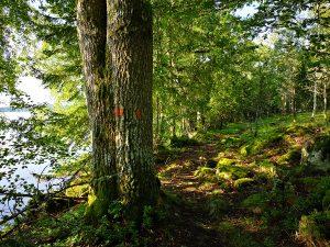 Mysigt att gå på stigen längs sjön Norra Vixen