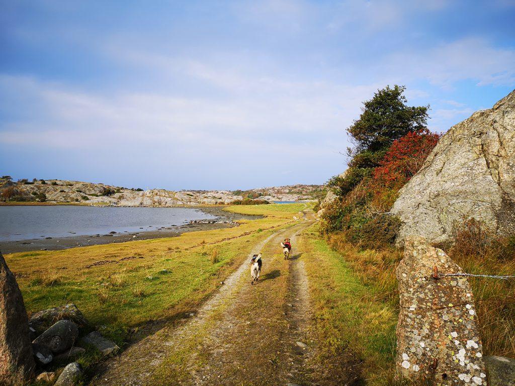 Glada hundar i charmig miljö - på väg mot Säby kile