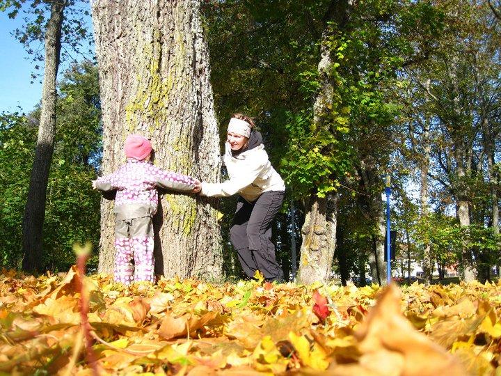 Man kan göra annat än kasta höstlöv också - här försöker vi se om vi kan nå runt trädet