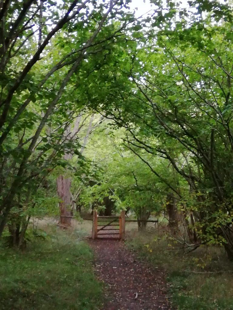 Lånestahedens naturreservat