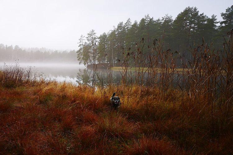 Norra Mossgölen utanför Eksjö