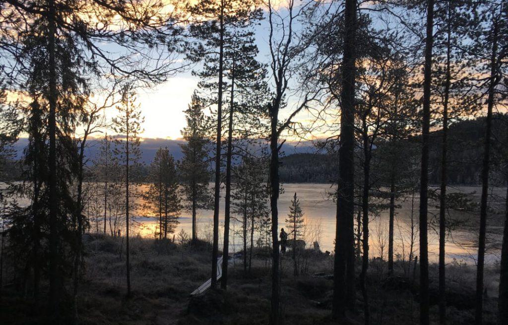 Morgon i Björnlandets nationalpark