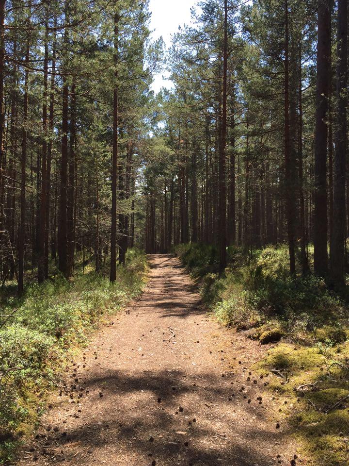 Vägen genom skogen