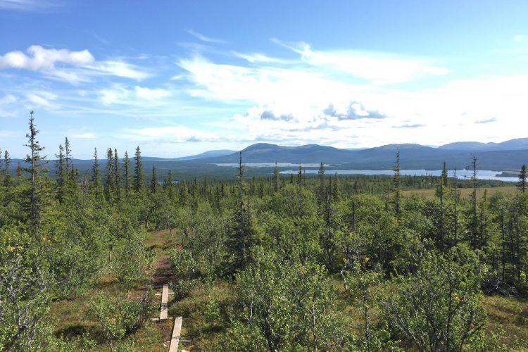 Utsikt från utsiktstornet vid platåleden, Ottsjö