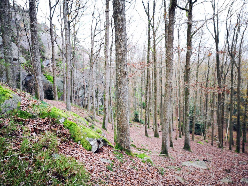 Sundsby vandringsleder består i stort sett av i det närmaste obearbetade naturstigar