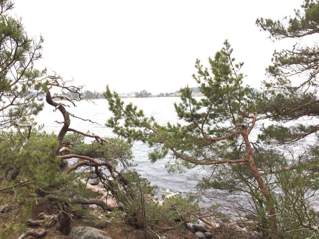 Utsikt i Stendörrens naturreservat