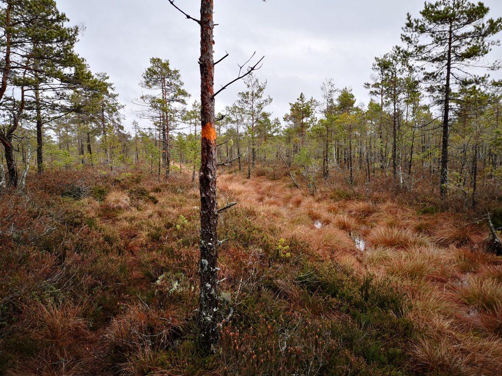 Vackert att gå längs Torvströmossens kant