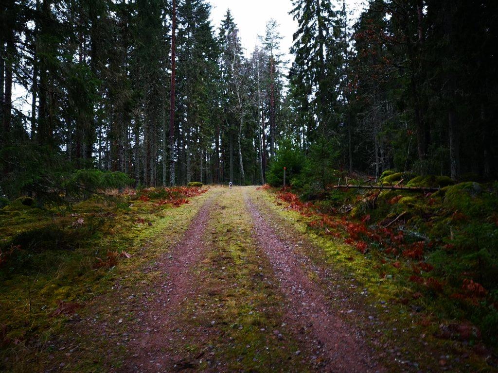 Dags för skogsväg igen