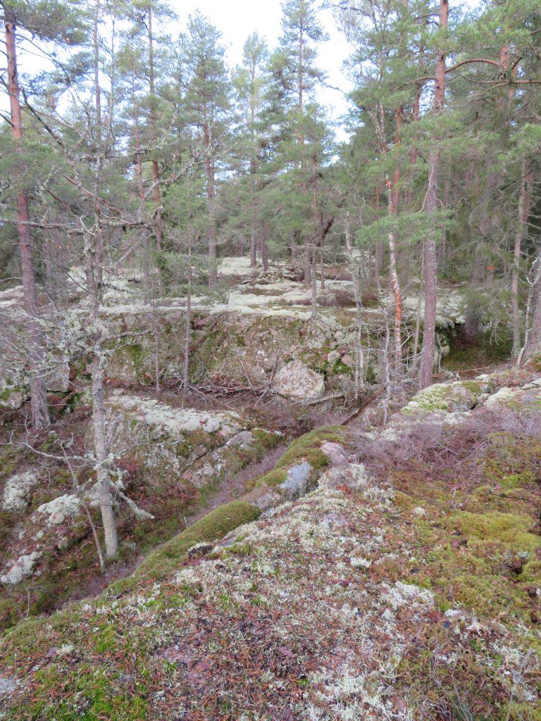 På Selo berg växer många olika lavar och mossor