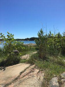 Sommar i Stendörrens naturreservat