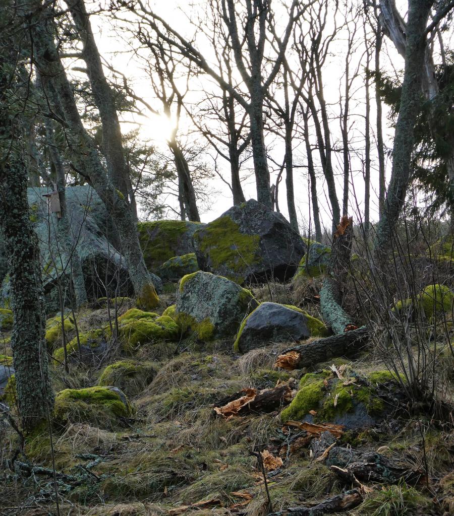 Spår av blåsväder i Stenöorn naturreservat