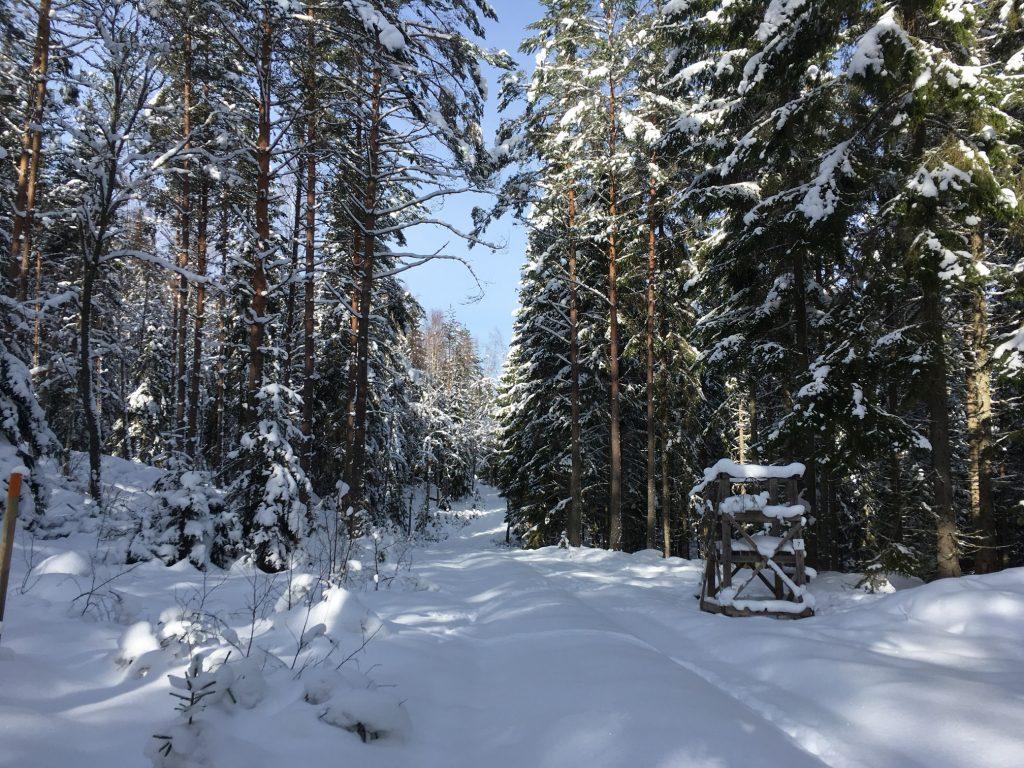 Trevlig skogsväg att gå på