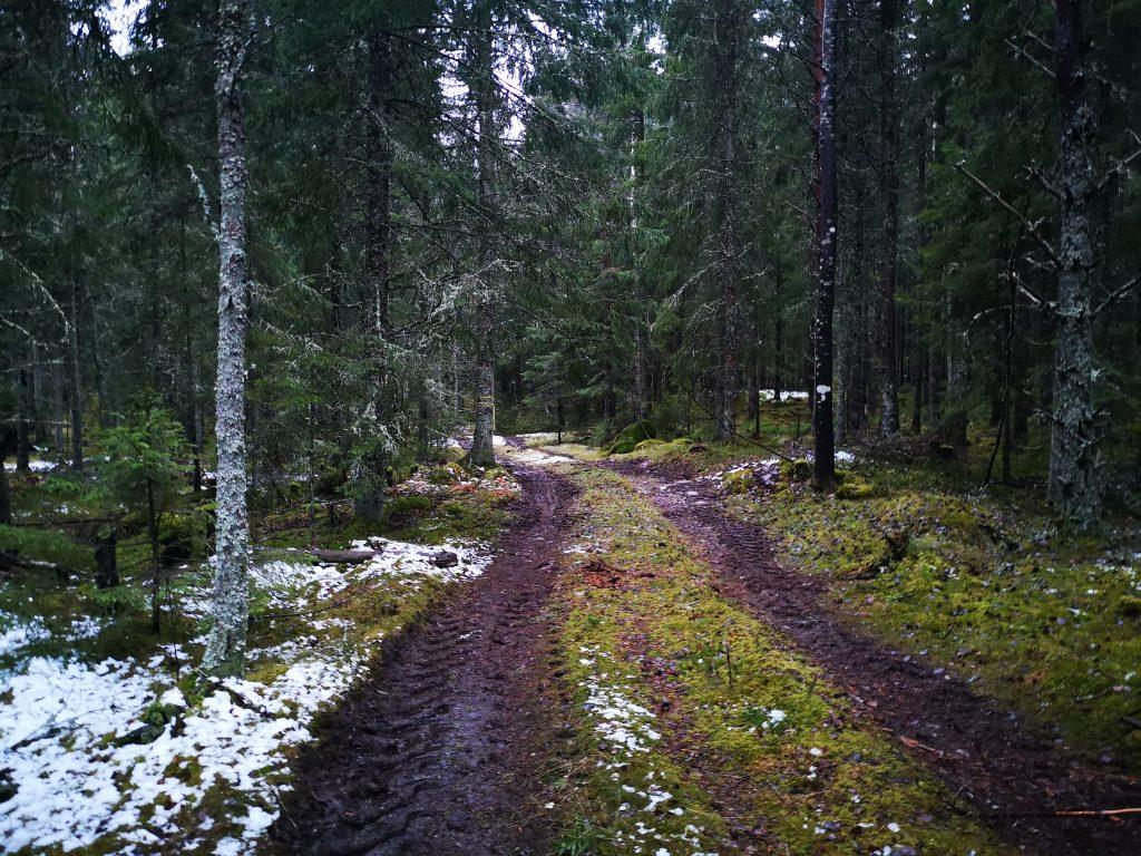 Det var lite blött längs skogsvägarna och stigarna