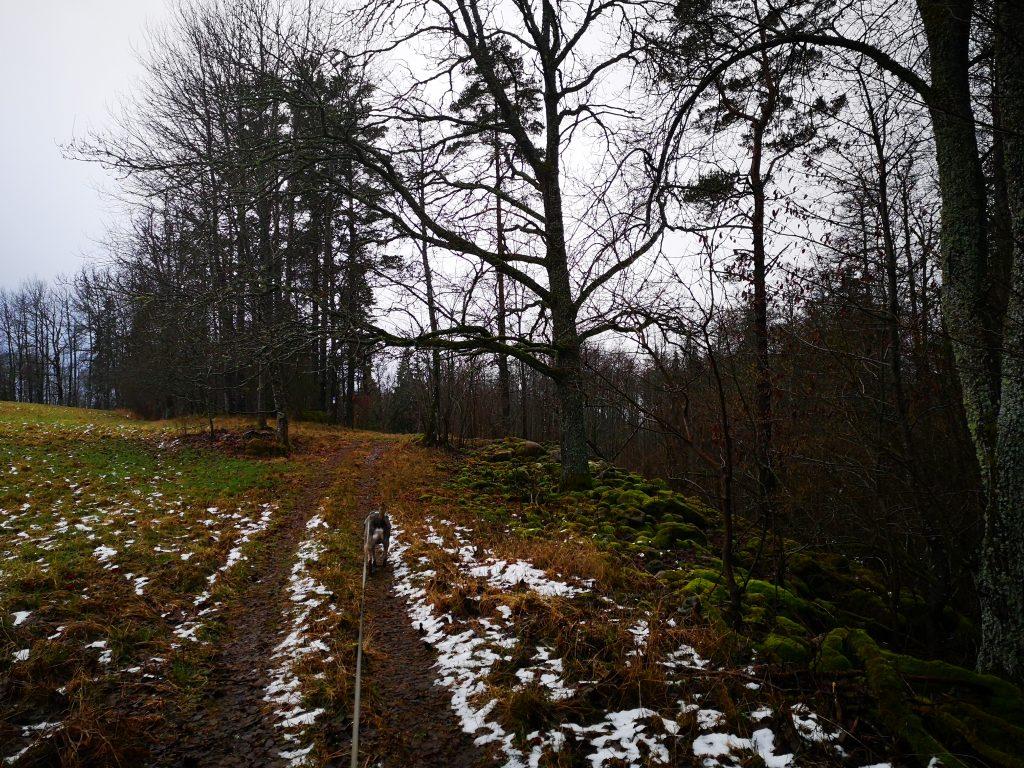 Mellan Älgstorp och Hackareviken - här längs den nya dragningen av höglandsleden