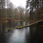 Dammen vid Hyttens kvarn