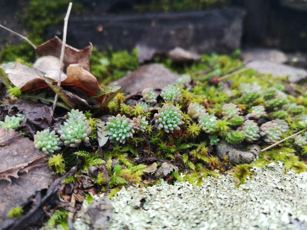 Växter i slottets paradtrappa