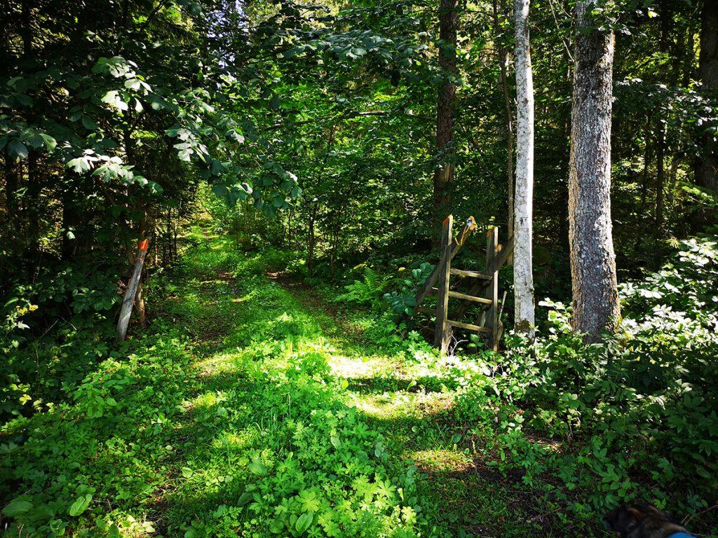 Så här såg skogsvägen ut i augusti