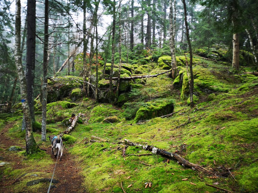 Sagolikt vacker skog var det på sina ställen