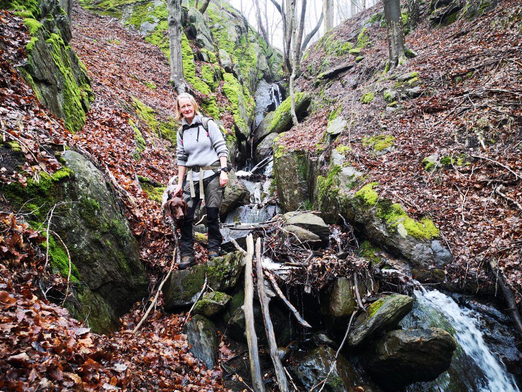 Här kommer vårt vandringssällskap nedklättrande bredvid vattenfallet, Husebyleden