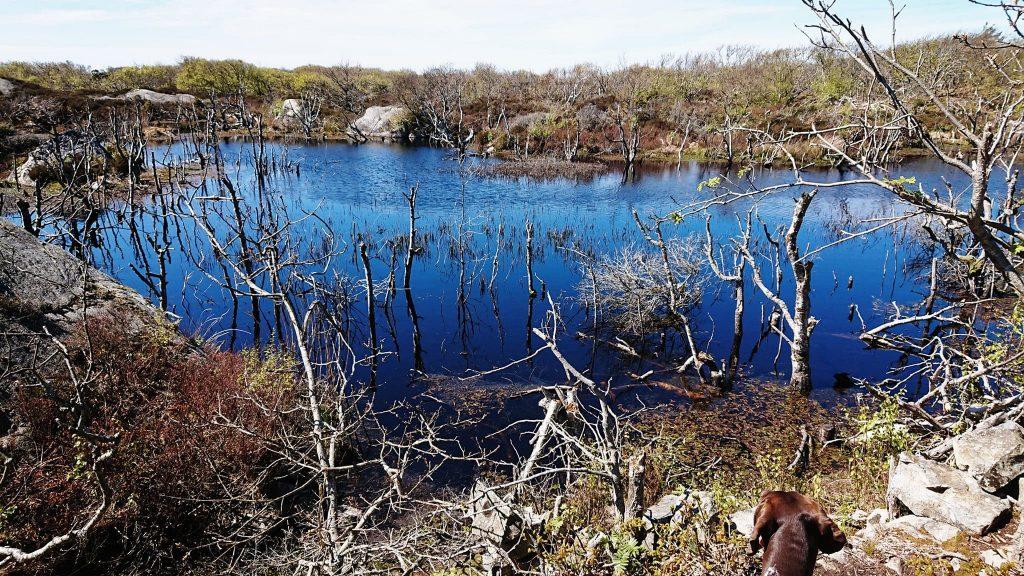 Bävrar har skapat ett våtområde som är så vackert att det tar andan ur en...
