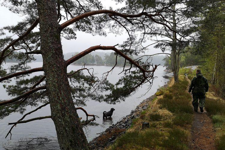 Från Skrapekärr runt Björsjön, Vättlefjäll naturreservat