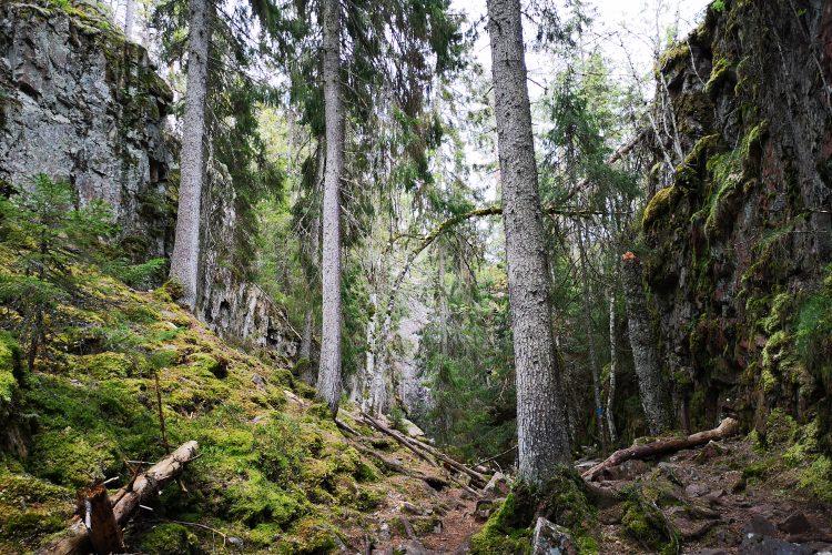 Skurugata naturreservat, Eksjö, Småland