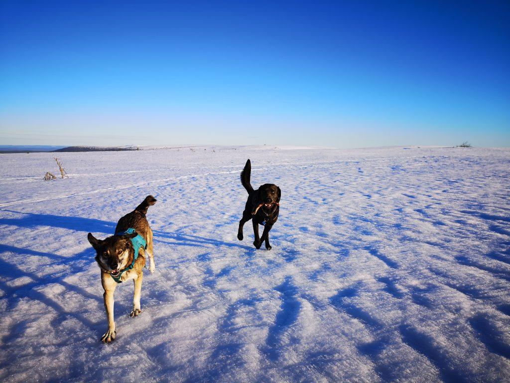 Glada hundar på fjället, Sälen