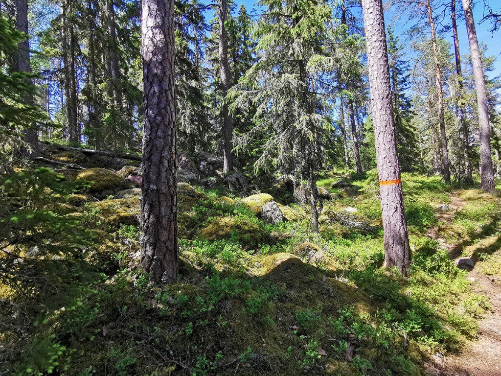 Härlig skog i Korphålorna