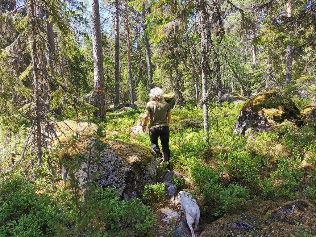 På väg in i den spännande skogen