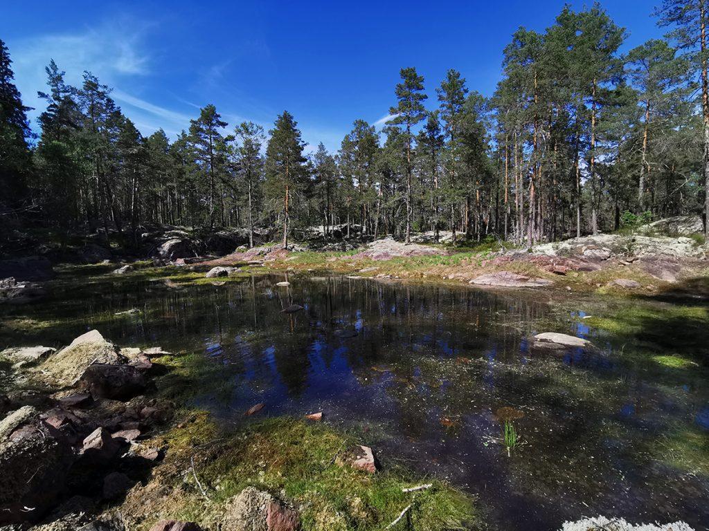 Den här vackra dammen ligger ganska nära parkeringen