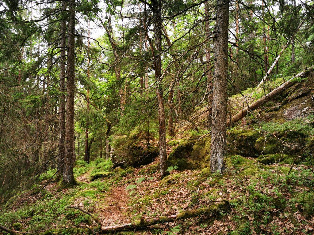 Känslan av vildmark och orördhet i Bergsjön naturreservat