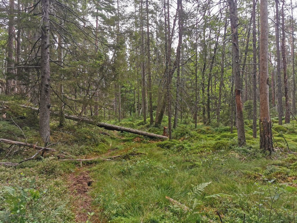 Längs stigen runt Bergsjön