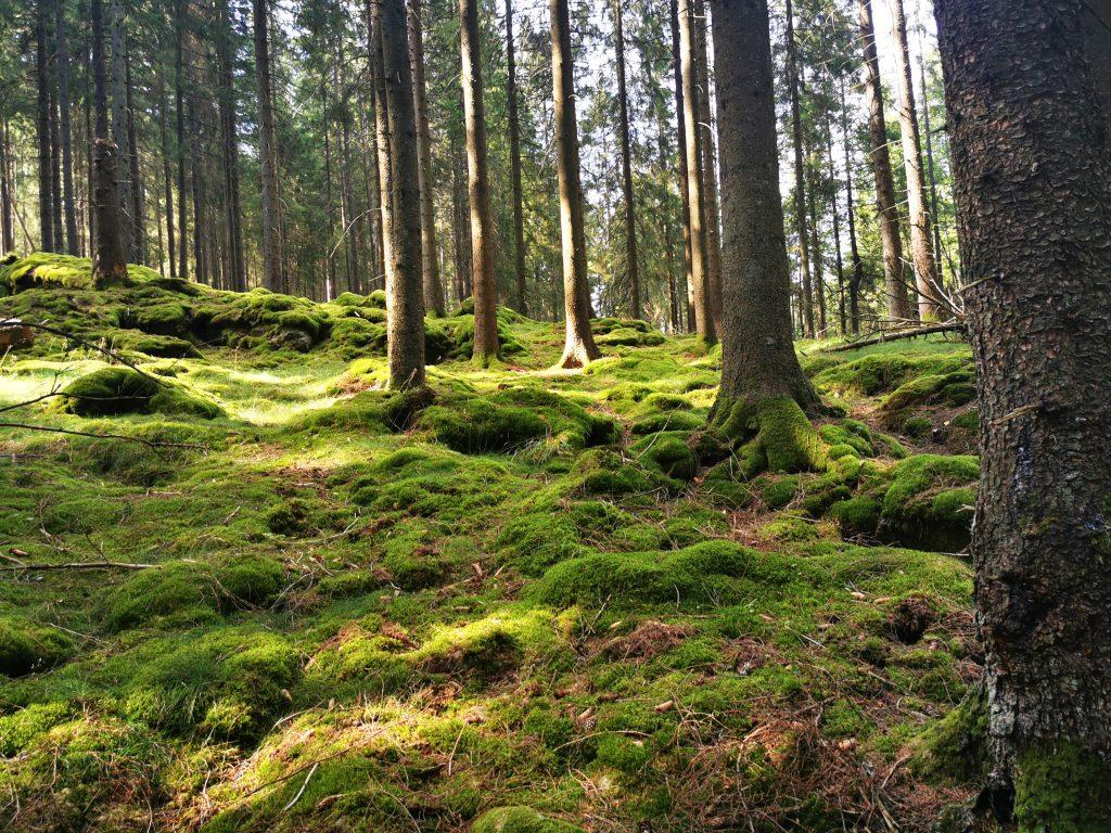 Härligt mossig skog, Rammdalen