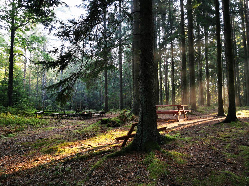 Fikaplats i skogen
