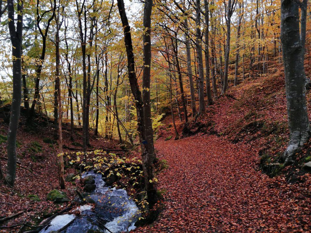 Bokskogen i Uggletofta längs Husebyleden