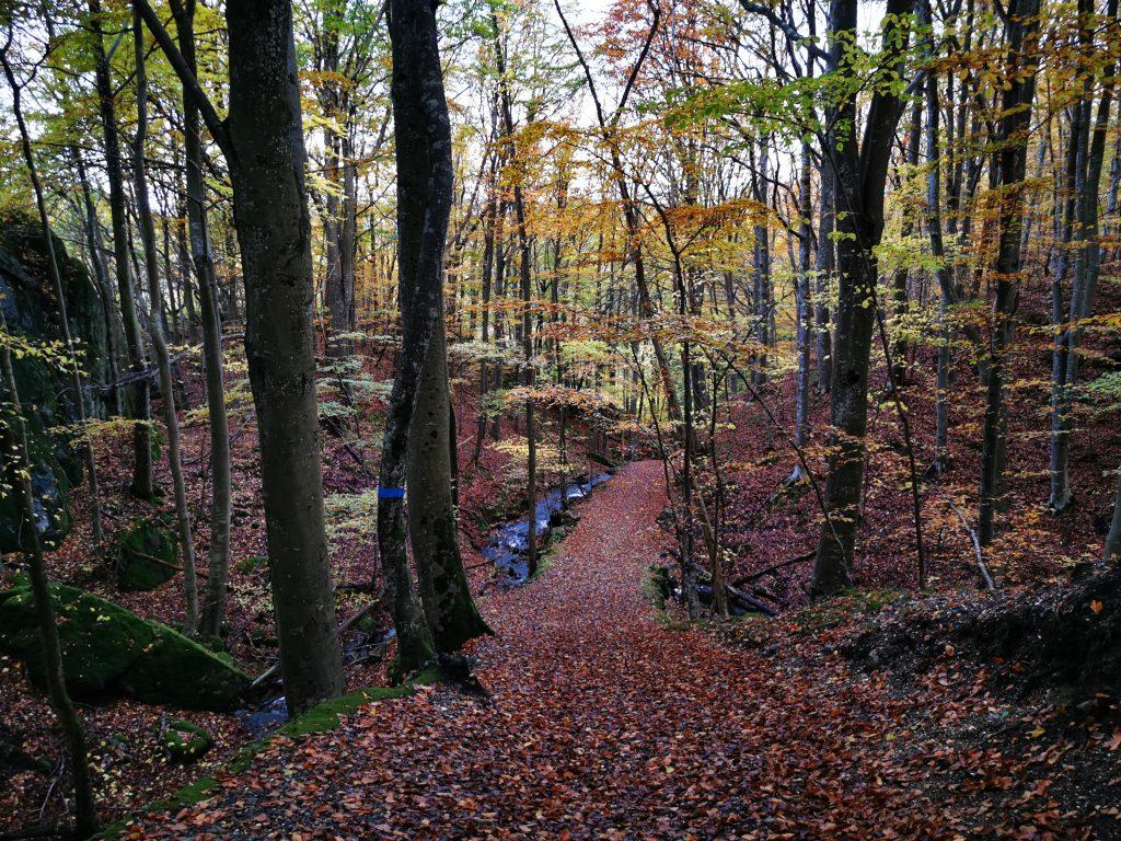 Bokskogen längs Husebyleden