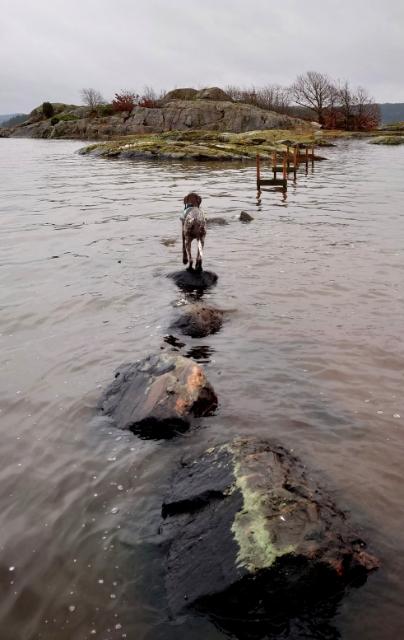 Sofias hund Spexa på litet äventyr på Flatön