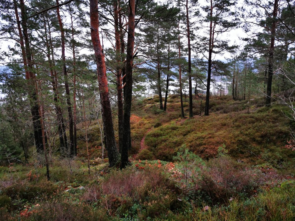 Längs den charmiga Moltemyrstigen, Svanesund