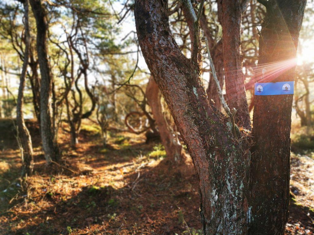 En avstickare från sträckan mellan Göksäter och Malö