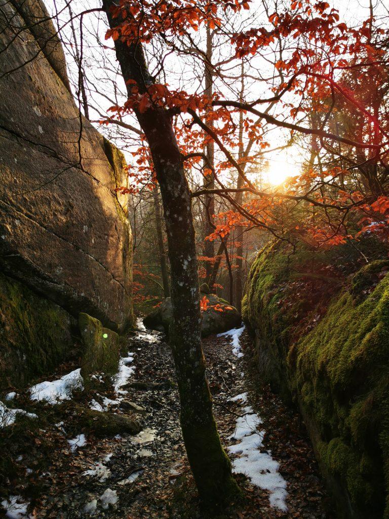 Solen målade bokskogen i Anneröd i de allra vackraste färger