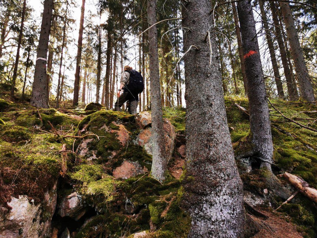 Mossig skog (och däruppe går Sofia)