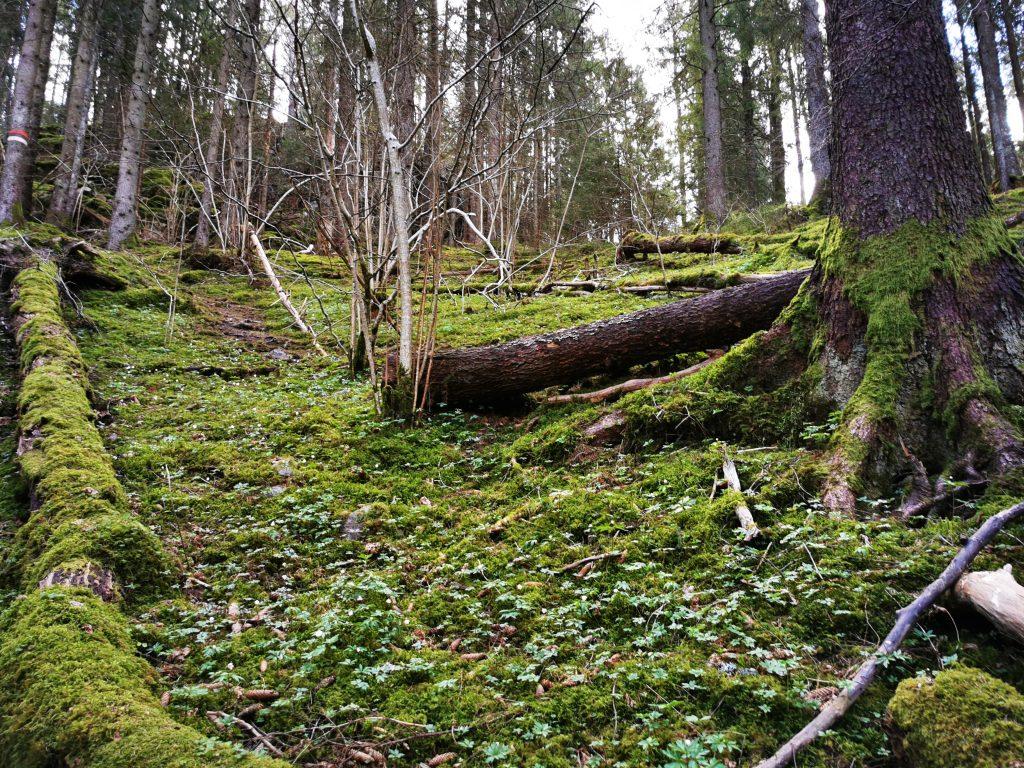Ramseröds naturreservat, längs Snäckskalstriangeln