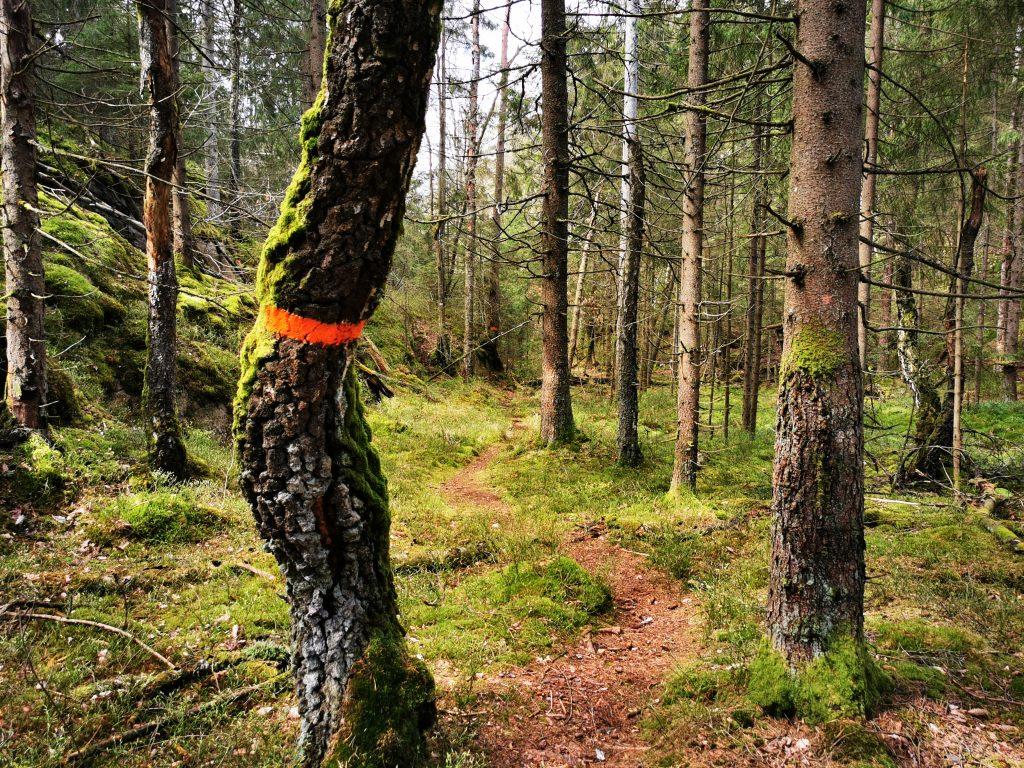 Naturskog så långt ögat når i Ranebo naturreservat