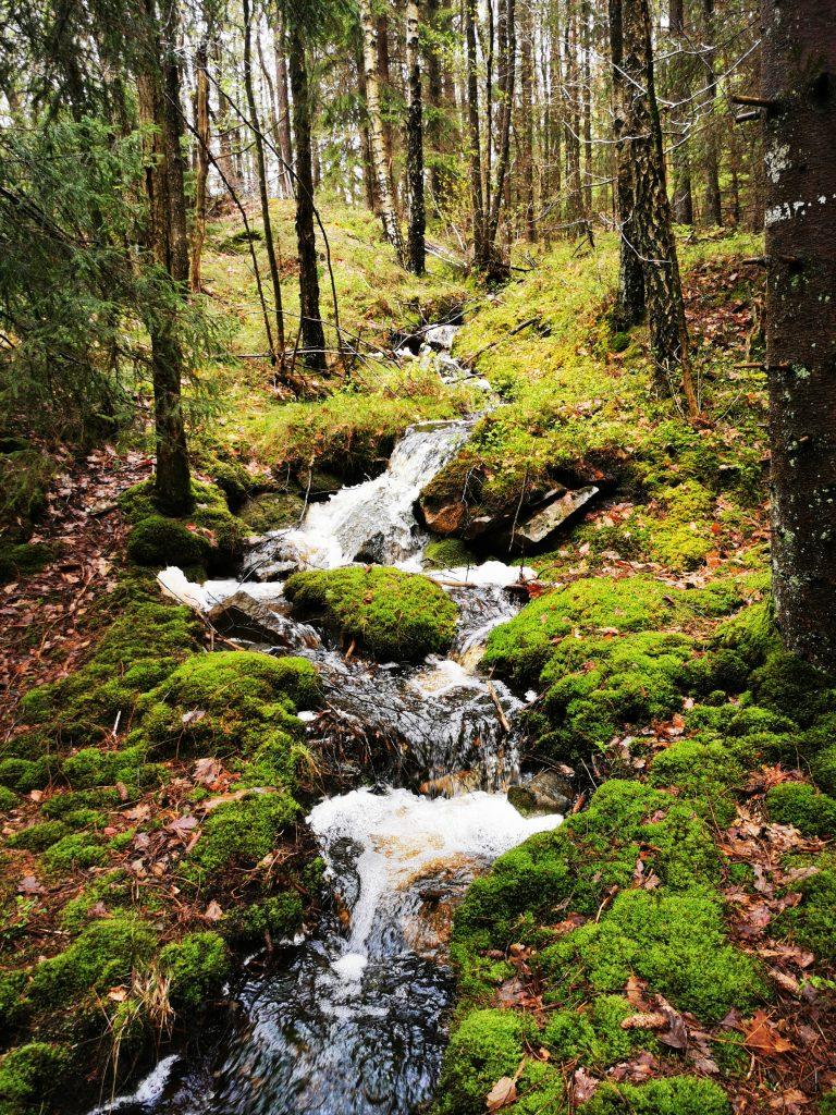 Vatten i mossig skog - och DET ljudet....