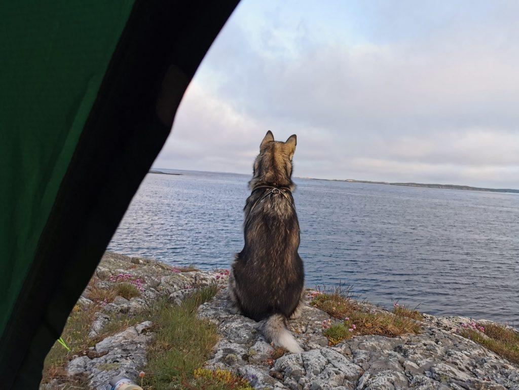 Balder-valpen spanar efter en båt medan vi packar ner sovsäckarna - och tältet från Jack Wolfskin