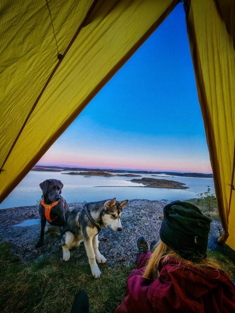 Jag och hundarna i tältet